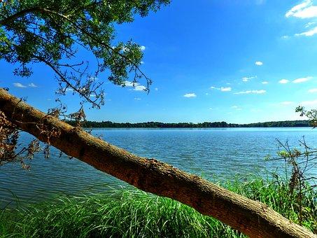 Trunk, Lake, Trees, Landscape, Water, France, Summer