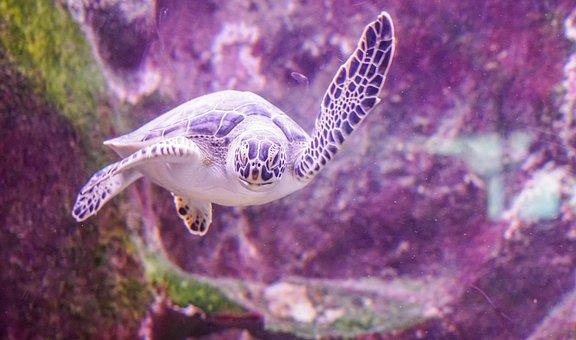 Sea Turtle, Swimming, Underwater, Marine, Tropical