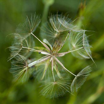 Dry Flower, Detail Of The Flower, Nature, Autumn, Plant