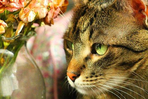 Cat, Peaceful, Relax, Eye, Mustache, Nose, Pets