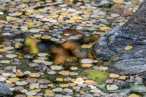 Pond, Leaves, Nature, Rock, Water, Park, Outdoor