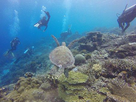 Scuba Diving, Scuba, Diving, Diver, Turtle