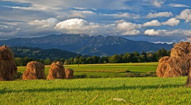 Dried Grass, Podhale, Tatry, Mountains, Poland