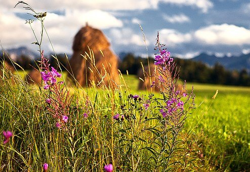 Flowers Wildflowers, Haymaking, Harvest, The Background