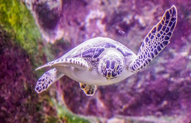 Turtle, Swimming, Underwater, Nature, Tropical, Water