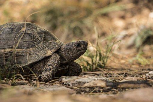 Turtle, Nature, Green, Wild, Natural, Wildlife, Animal