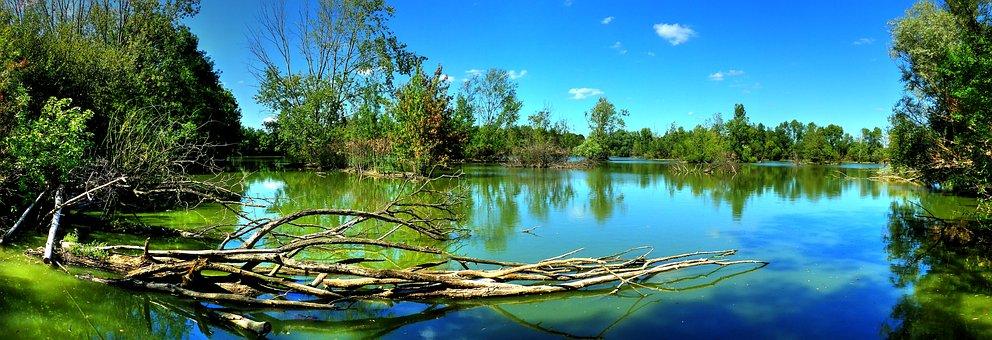 Lake, Trees, Landscape, Water, France, Summer