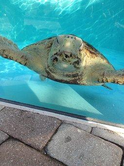 Turtles, Water, Pool, Animal, Sea, Underwater, Wildlife