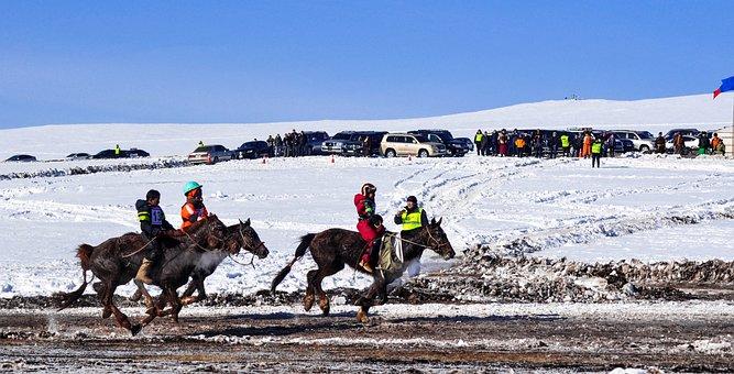 Horse Race, Finish Line, Winter, Horseback, Equine
