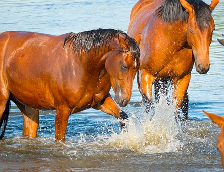 Horses, Bathing, Playing, Bath, Fun, Water, Funny