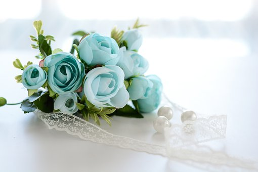 Flower, Blooming, Rose, Beautiful, Beauty, White