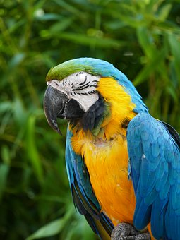 Parrot, Bird, Feathers, Plumage, Wings, Beak