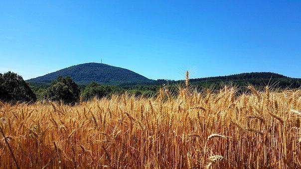 Wheat, Farm, Rye, Cereal, Farmland, Crop, Field