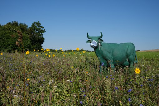 Cow, Horns, Field, Flowers, Meadow, Land, Face Mask
