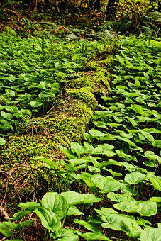 Forest Walk, Millersylvania State Park, Moss