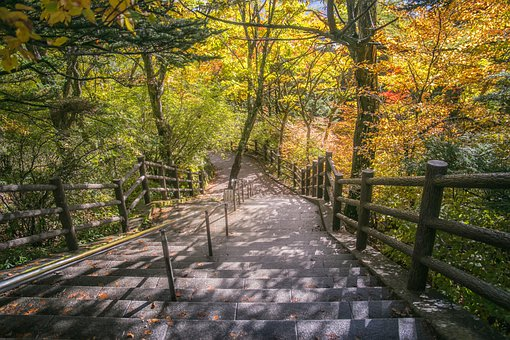 Park, Stairs, Trees, Leaves, Autumn, Nature, Landscape