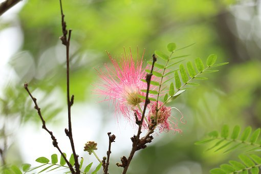 Flower, Brush Flower, Kerala, Nature, Blossom, Tree