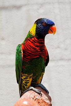 Parrot, Bird, Plumage, Feathers, Beak, Colorful, Bill