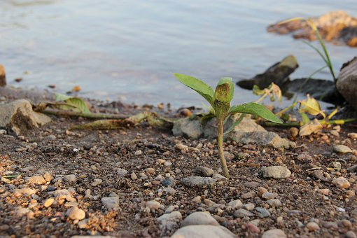 Plant, River, Nature, Bank, Riverbank, Stones, Water