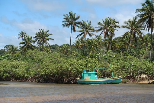 Boat, Mar, Bahia, Brazil, Coconut Trees, Travel, Trees