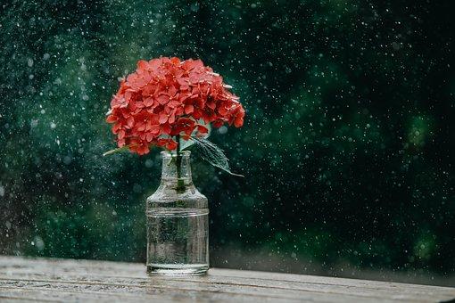 Rain, Vase, Beauty, Flowers, Blossom, Water, Nature