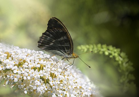 Flowers, Butterfly, Insect, Bug, Wings, Antenna, Petals