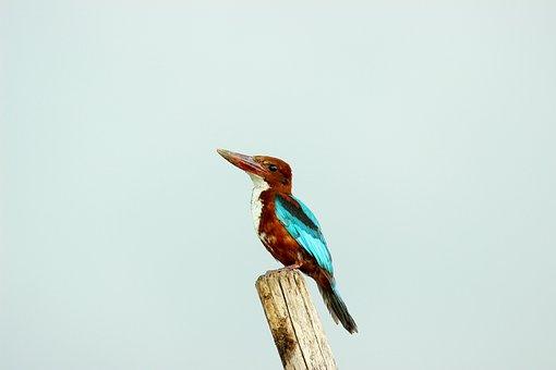 Woodpecker, Bird, Nature, Beautiful, Perched