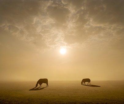 Horses, Equine, Nature, Mane, Field, Mare, Gallop