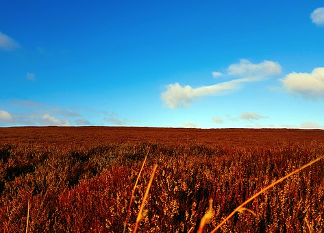 Bracken, Blue Skies, Horizon, Moors, Outdoors, Clouds
