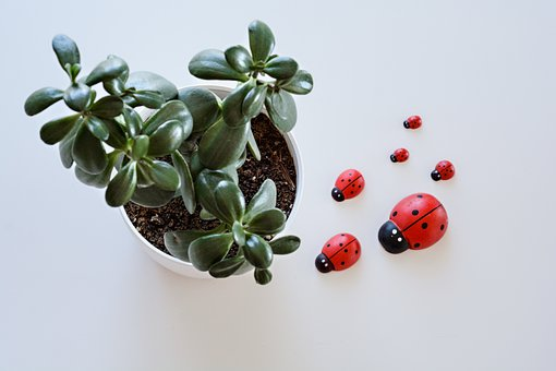 Plant, Leaves, Pot, Flower Pot, Ladybugs, Insect