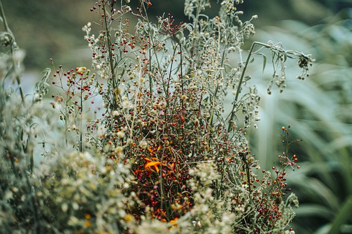Flower, Plants, Weeds, Grass, Flora, Altitude, Nature