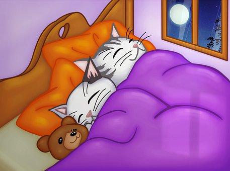 Cats, Siesta, Rest, Night, Sleep, Animals, Bed, Dream