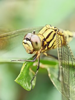 Dragonfly, Insect, Nature, Biology, Animals, Wing