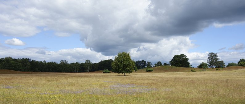 Trees, Field, Meadow, Grass, Clouds, Burial Mounds