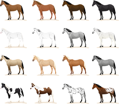 Horse Horses, Coat Color, Equine Coat Colors