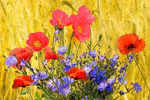 Background, Nature, Flowers, Poppy, Cornflower, Wheat