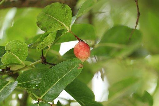 Fruit, Cherry, Kerala, Cherries, Food, Fresh, Delicious