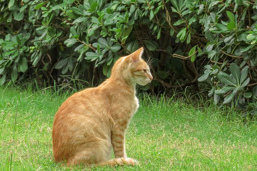 Cat, Feline, Domestic, Pet, Garden, Grass, Animal