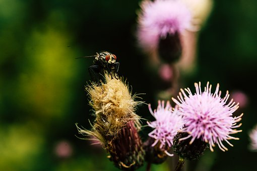 Fly, Insect, Flower, Nature, Floral, Flora, Blossom