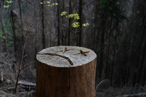 Tree, Strain, Wood, Log, Forest, Nature, Mood, Trail