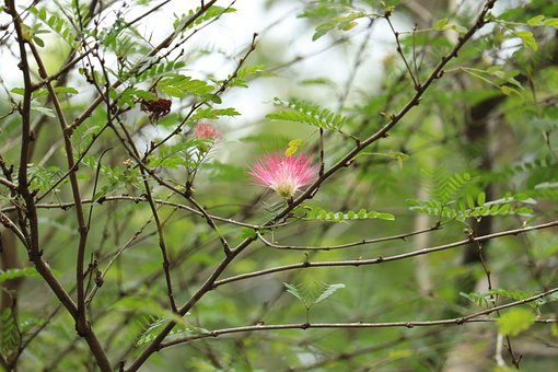 Plant, Flower, Trees, Branches, Nature, Garden, Floral