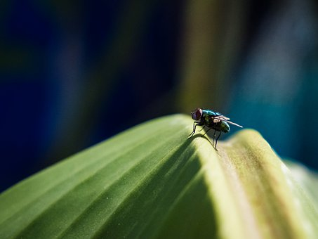 Fly, Insect, Bug, Wildlife, Garden, Summer, Leaf