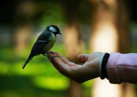 Bird, Beak, Plumage, Feathers, Hand, Feeding, Animal