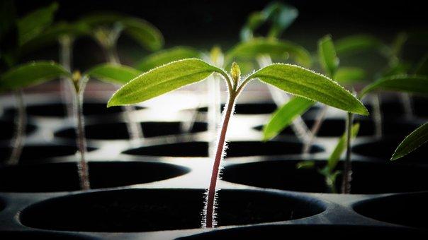 Plant, Leaves, Foliage, Cultive, Organic, Rung