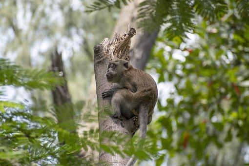 Monkey, Macacque, Leap