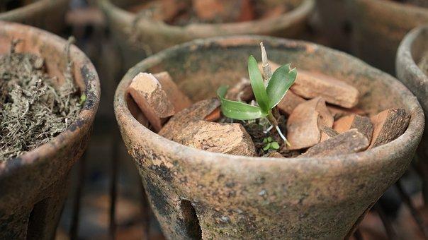 Orchid, Plant, Pot, Flower, Botanical, Vase, Garden
