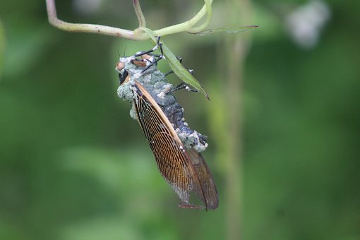 Moth, Insect, Leaves, Plants, Wings, Vintage, Fly