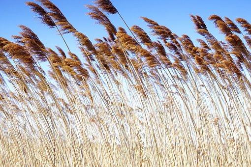 Reeds, Plants, Sea, Tropical, Wind, Outdoors, Beach