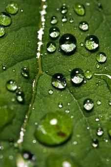 Leaf, Water, Droplets, Nature, Green, Rain, Dew, Drops