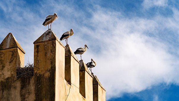 Storks, Perched, Birds, Wall